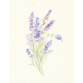 Decoration wedding albums, Lavander watercolor
