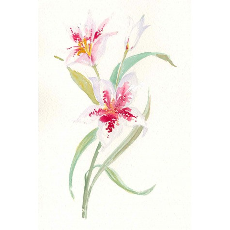Decoration for albums , lily